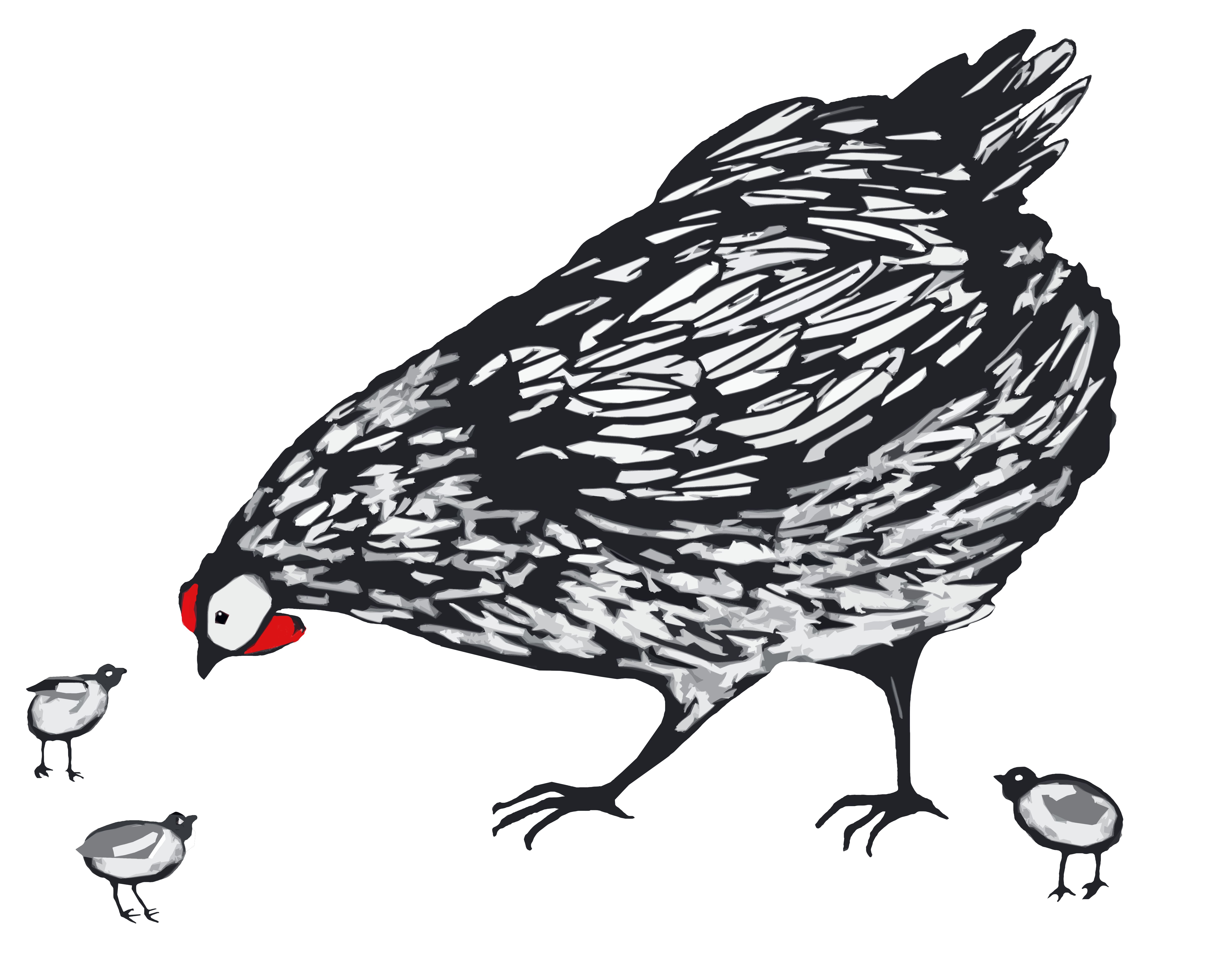 Mother hen.jpg